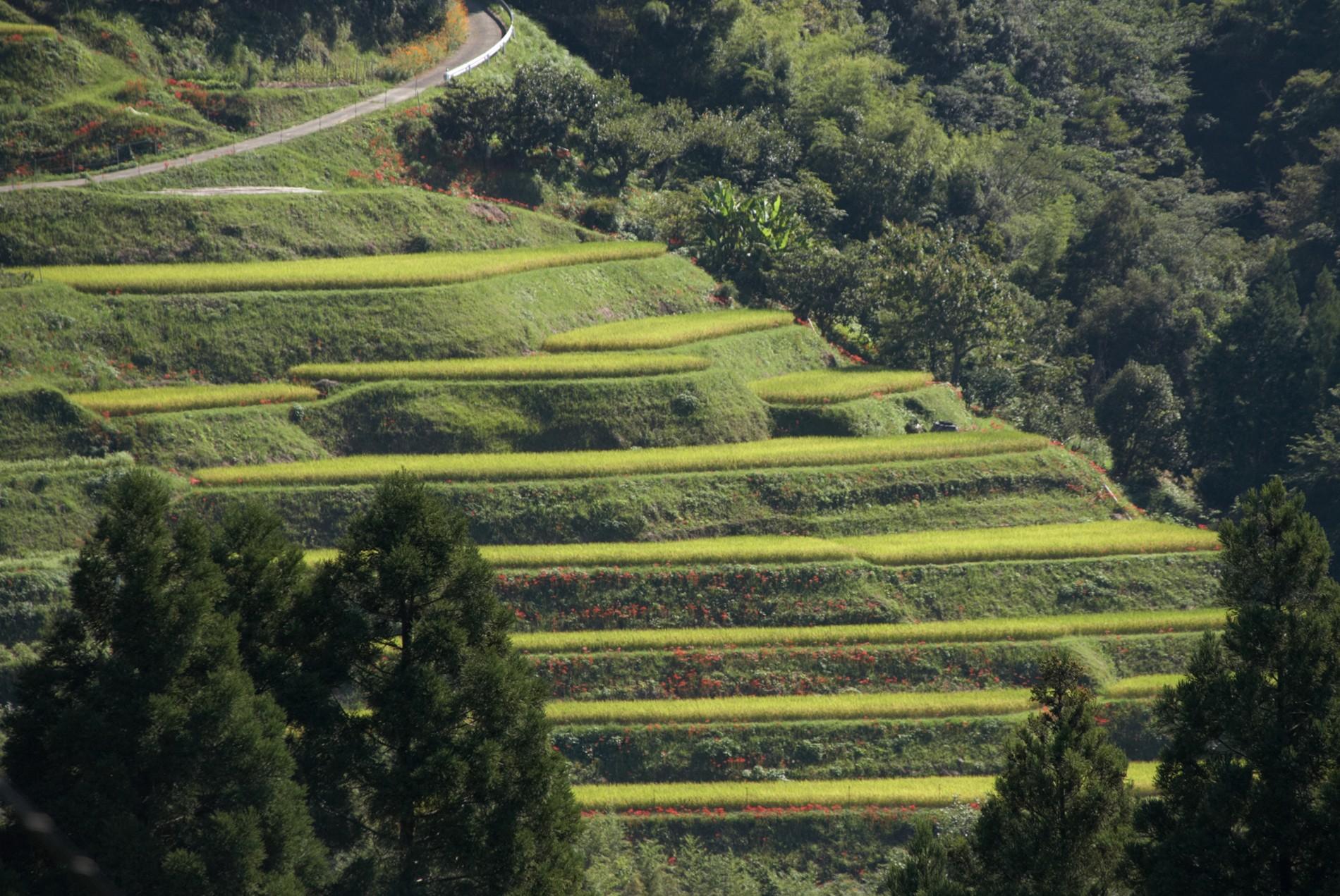 熊本県|人吉市|大和一酒造元|球磨焼酎|米焼酎|焼酎|人吉盆地|棚田|